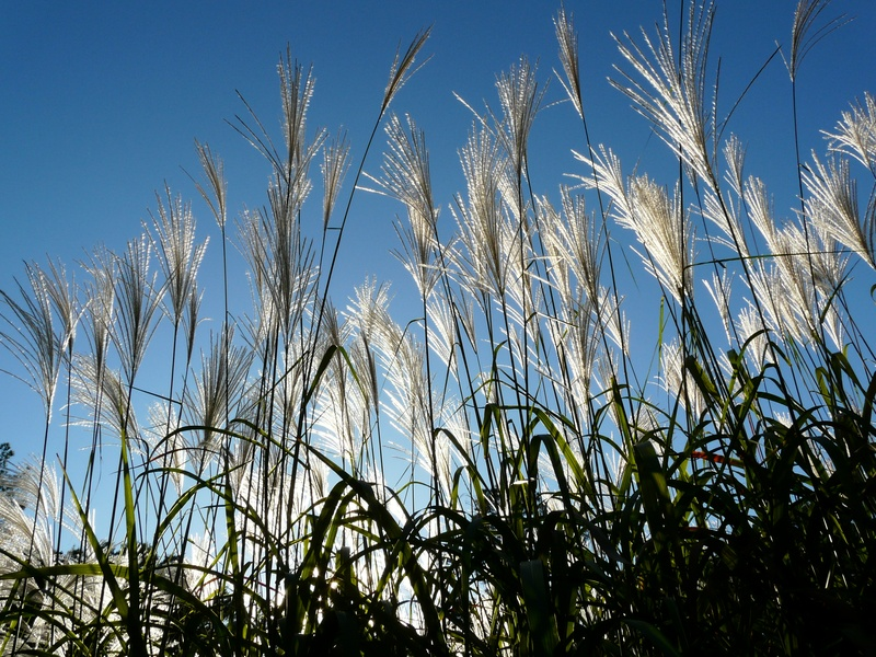 how to make biofuel from grass